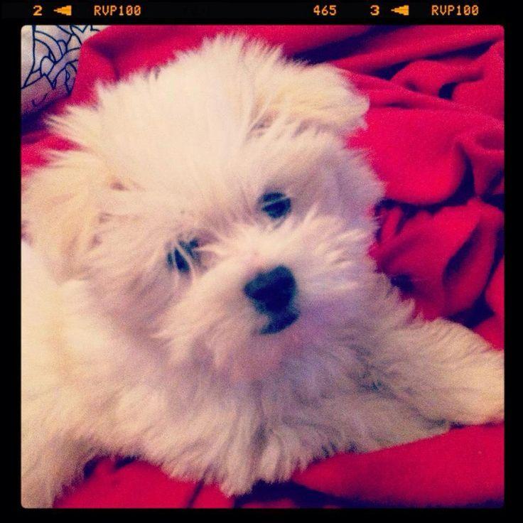 #Bimba #Pet #Dog #Love