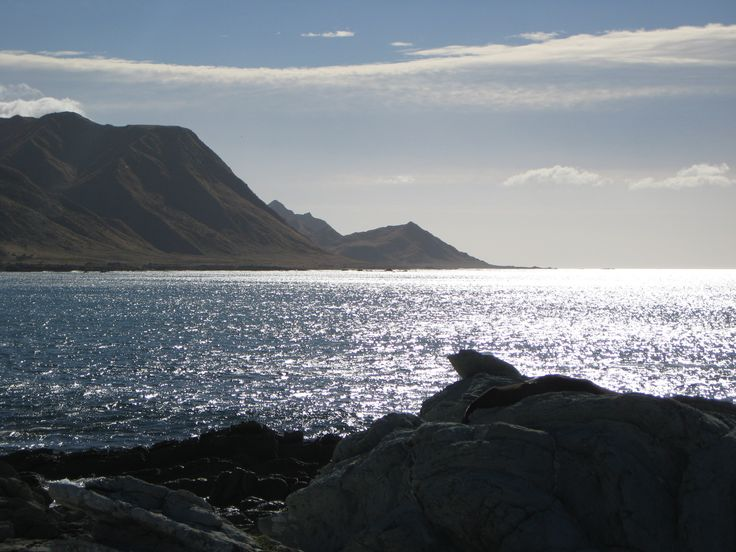 Tora Walk and seal