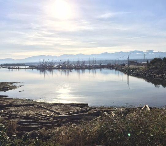 Blog — Island General Shoppe