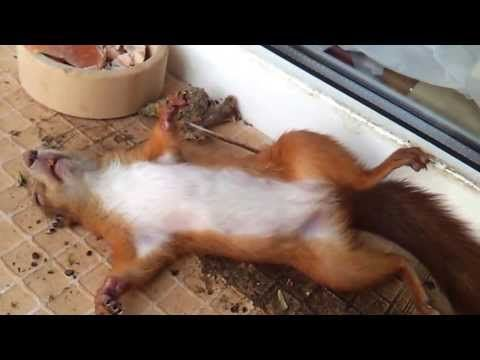 Funny squirrel is sleeping - YouTube