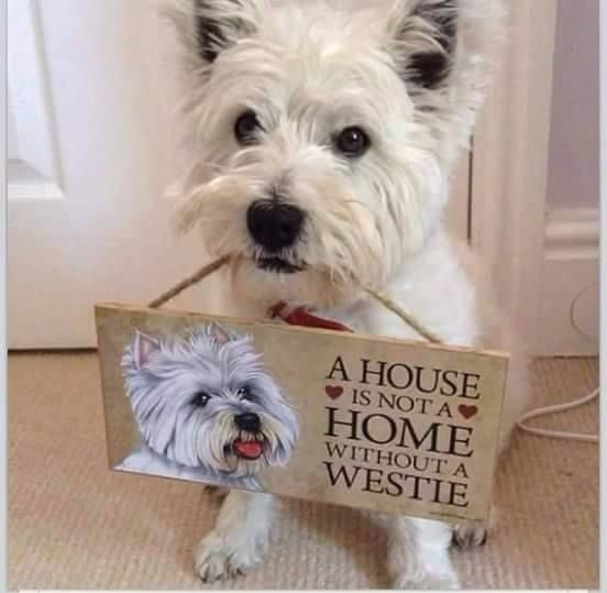 House without a westie...