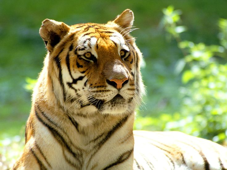 Mejores 80 imágenes de ANIMALES SALVAJES en Pinterest | Animales ...