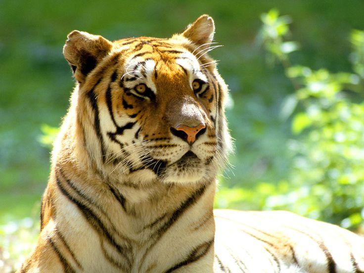 maravillosas fotos de animales - Taringa!