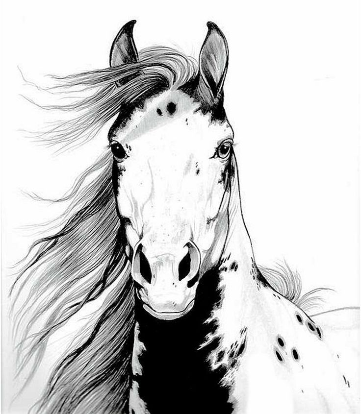 A Wild Mustang ... | Draw Something | Pinterest