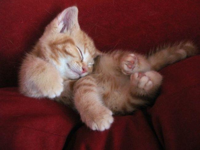 Сute kittens - 99 Pics (54)