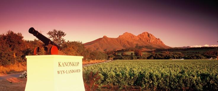 Kanonkop Wine Estate - Stellenbosch