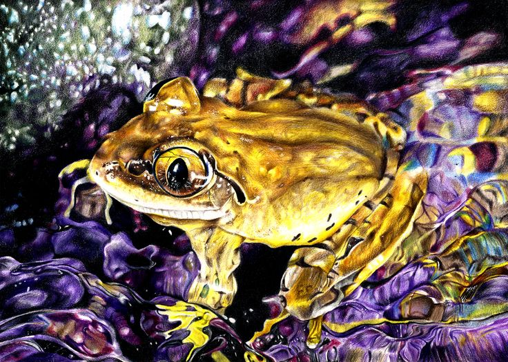 Realistic drawing of a yellow frog. https://www.youtube.com/watch?v=GQD2i7WpDus