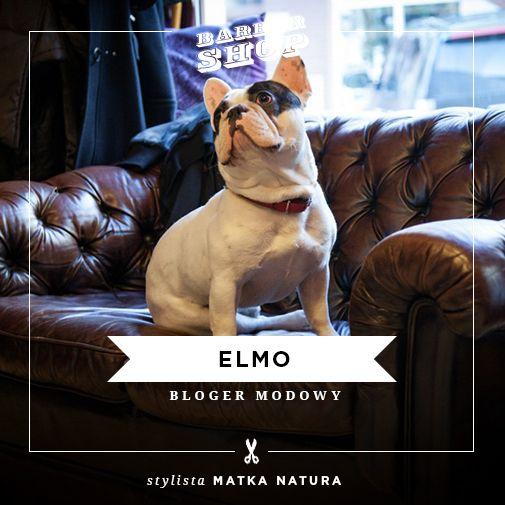 Elmo, real bloger dog. Foto Martyna Józefiak: http://photoandgraphic.pl/