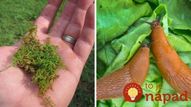 Keď budete v lese, naberte si trochu machu: Geniálna rada mojej svokry, v záhrade mi veľmi pomohla a môže sa hodiť aj vám!