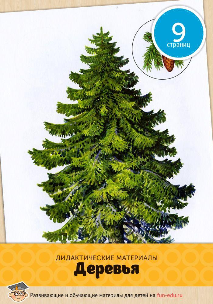 Картинки дерева для детей актуальны в любом возрасте: узнать полезные факты о зеленых друзьях интересно и малышам и школьникам.