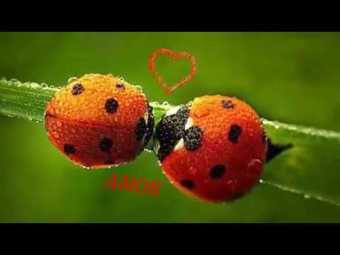 LADYBUG IN MY HOUSE,That Mean SPRING Music video mp4