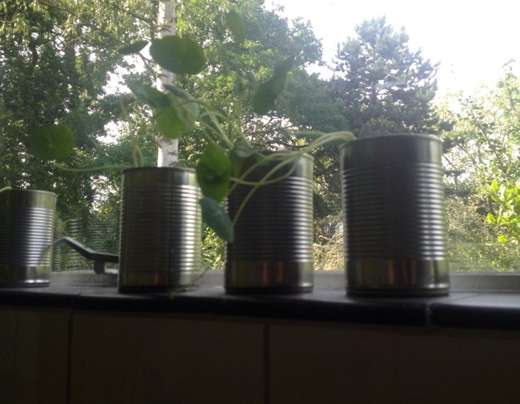 Tim cans as containers for nasturtiums
