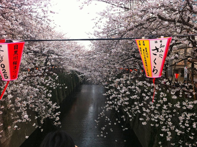A different perspective from standing in the middle of a bridge crossing the Meguro river.  Taken early April 2012.