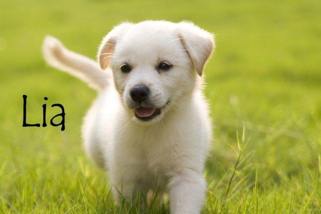 Les noms de chien qui commencent par L...