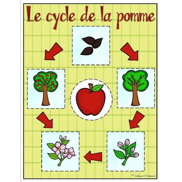 Pommes : Le cycle de la pomme                                                                                                                                                                                 Plus