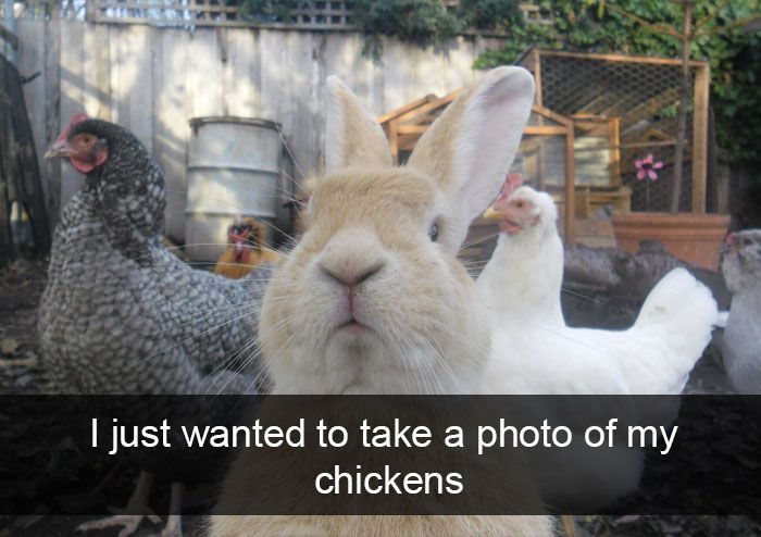 Animal Snaps How To Take Photos Therapy Animals Funny Animals
