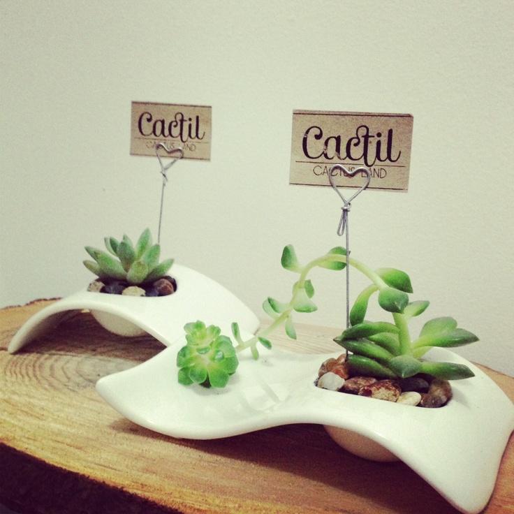 Cactus y suculentas minis en materas de cer mica esmaltada for Oficinas minimalistas