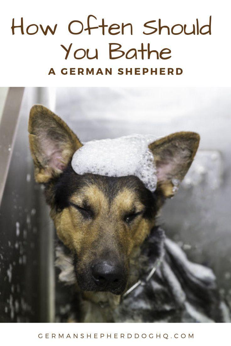 How Often Should You Bathe A German Shepherd In 2020 German