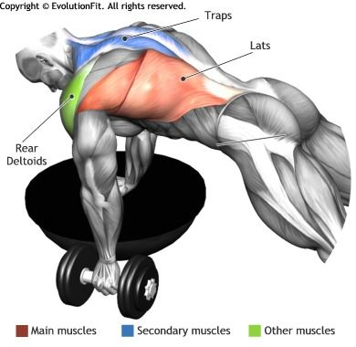 LATS -  SINGLE ARM DUMBBELL ROW ON BOSU