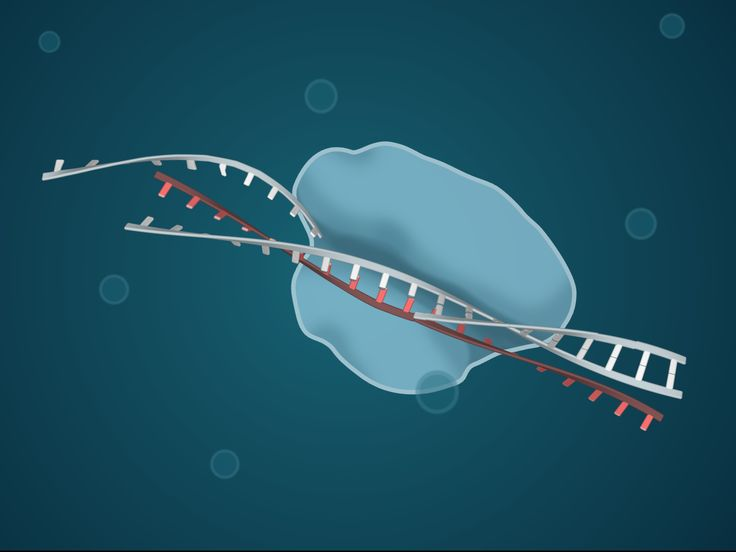 VIDEO: Science journalist Carl Zimmer explains how the revolutionary new genome editing tool CRISPR works.