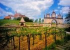 Images to Desktop Austrian Vineyard