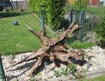 schones baumwurzel deko garten auflisten abbild der bcbcceffe old trees garden decorations