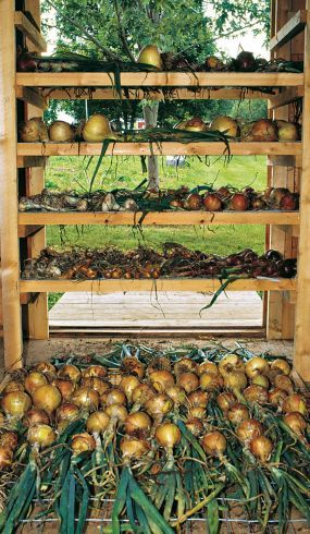 lots of good info about growing onions