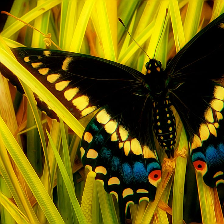 butterfly~ fight or flight by Thomas Alexander~~