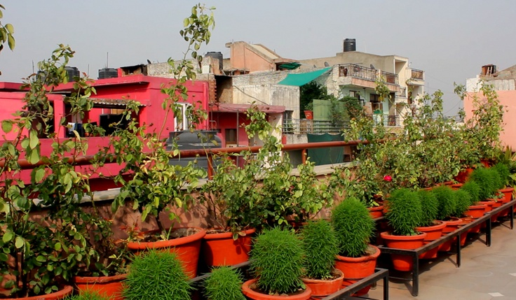 Rajat's roof garden in a sururb of Delhi