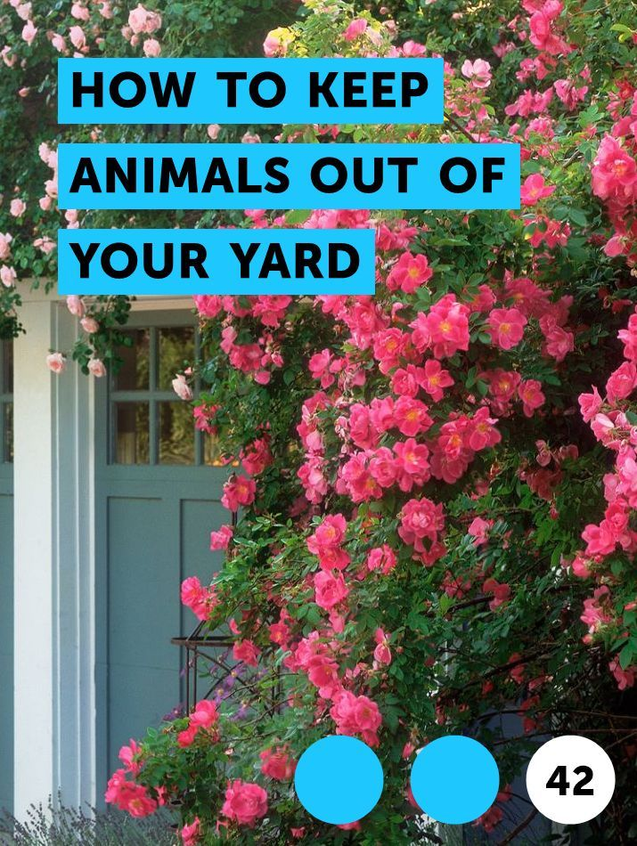 How To Keep Animals Out Of Your Yard Rose Of Sharon