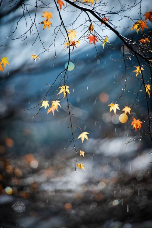 The last leaves clinging to the branches.