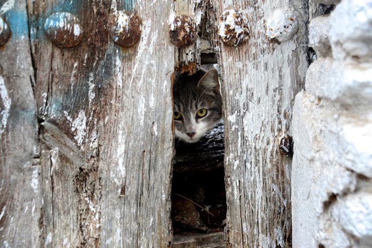 Alley Cat in Ronda. photo: Dennis Faro