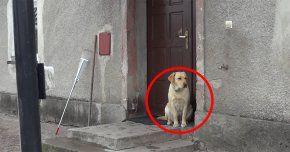 Lo Dejaron Afuera. Cansado De Esperar, Este Perro Hace Algo Muy Inteligente Para Que Le Abran - http://www.notiexpresscolor.com/2016/12/29/lo-dejaron-afuera-cansado-de-esperar-este-perro-hace-algo-muy-inteligente-para-que-le-abran/
