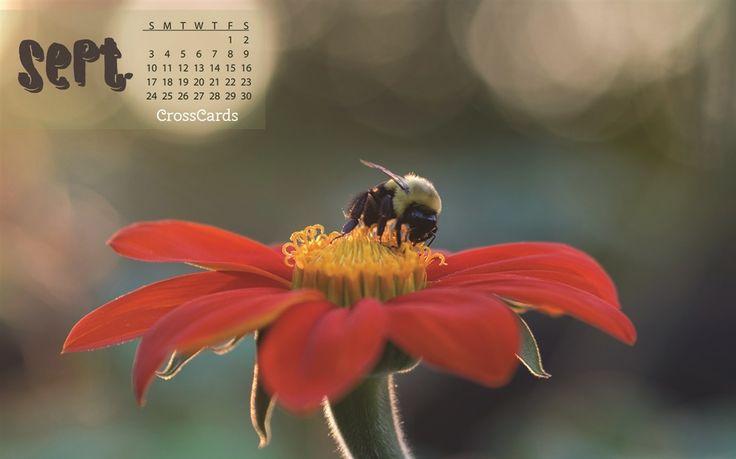 September 2017 - Bloom + Bee
