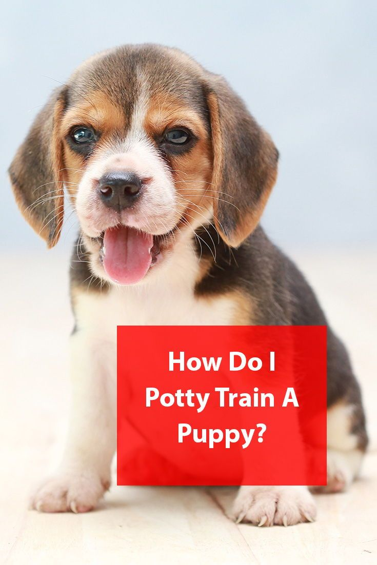 How long does it take to potty train a puppy puppies