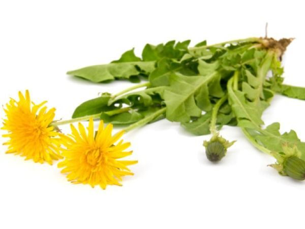 Herbs for weight loss Herbs for Weight Loss # 12: Dandelions This flower head helps to cleanse your body and helps to slow down your digestion. Dandelions help to make you feel full for a longer period and have very good nutritional content as well. So start eating this flower to fit into your old jeans. Who knew this flower that grows wildly in my yard could make me skinny...ALSO SEE: Medicinal Uses of Dandelions