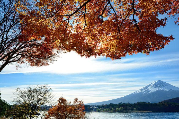全部尺寸 | Morning Mt. Fuji & Maple 早安富士山 in Lake Kawaguchi 日本山梨縣河口湖 DSC_5713 | Flickr - 相片分享!