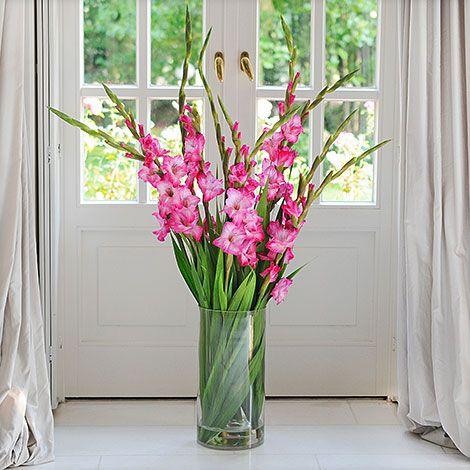 PINKFARBENE GLADIOLEN // #Pur und #elegant. Zehn #pinkfarbene #Gladiolen sind mit einer Länge von ca. 80 cm ein #wunderschöner und sommerlicher Vasenschmuck. Eine bunte #Idee, um sich selbst oder einen lieben Menschen zu erfreuen. // Lieferbar bis zum 02.09.2015 // #blumen #pink #flower #summer #beautyful #wunderschön #geschenk #blume2000 #blume2000de