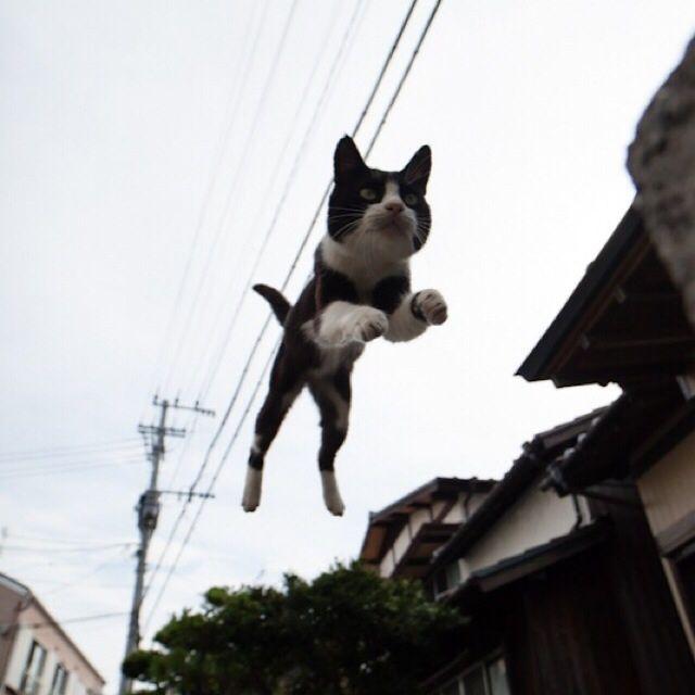 猫が空を飛ぶ瞬間をおさめた、躍動感あふれる写真12選|人生の失敗例