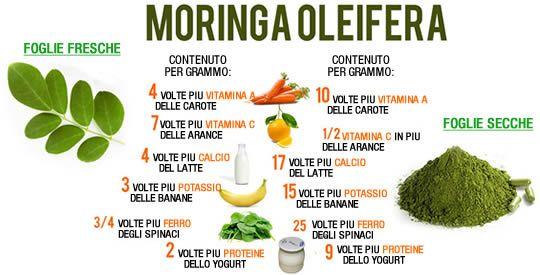 Moringa: una potente pianta terapeutica | Rimedio Naturale