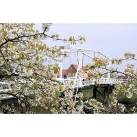 2475_3318 Historische Zugbrücke über die Luehe bei Steinkirchen | Fruehlingsfotos aus der Hansestadt Hamburg; Vol. 2