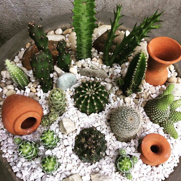 My cacti collection