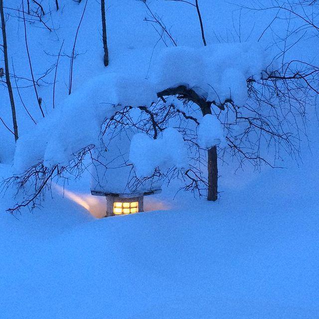 ❄️ENCORE DE LA NEIGE❄️... #letitsnow #snow #winter #photo #winterwonderland #lantern #japaneselantern #lights #magiclight #wintergarden #trees #treelovers #landscapephotography #landscapephotographer #neige #photography #photographer #garden #garten #nordicgarden #gardendesign #gardendesignmag #japanesegarden #gardenphotography #inmygardentoday #mygarden #dusk #jardindhiver