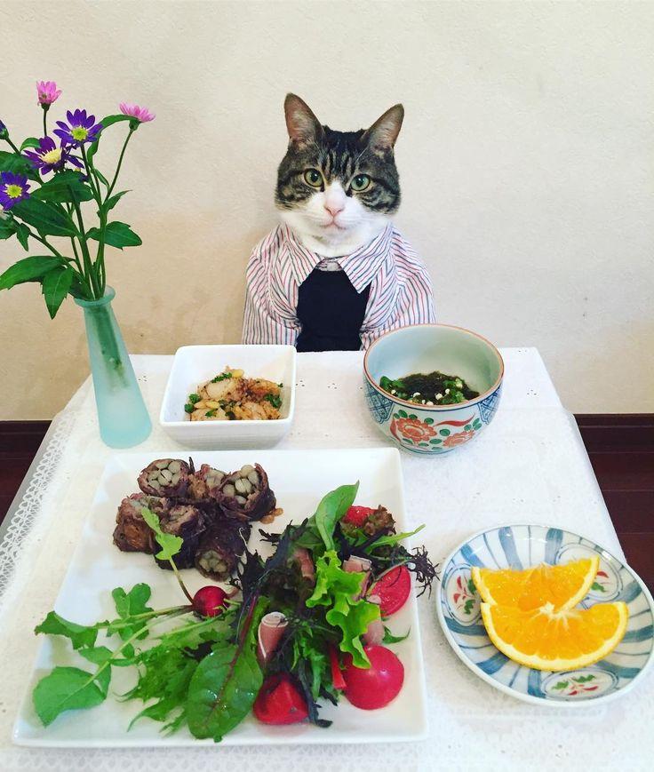 Sliced beef rolled with burdock root,Garlic sauteed baby scallops,salad #cat#cats#catstagram#catsofinstagram  #instacat_meows#instacat_models#bestmeow#sweetcatclub#food#chef#にゃんこ#ねこ #ネコ#ニャンスタグラム#ペコねこ部#みんねこ#picneko#猫#牛肉のごぼう巻き#サラダ #ベビーホタテのガーリックソテー#オレンジ #オクラともずくの和え物#都忘れ#斉藤和義 #mannishboys#zip写真部