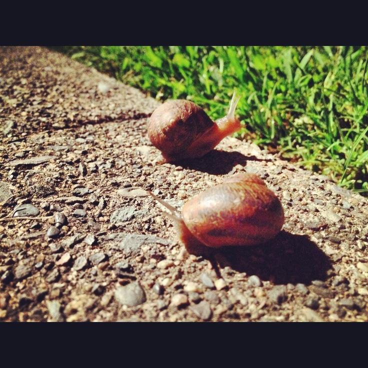 32 Best Images About Snails On Pinterest Slug Wedding Cake Toppers And Spirals