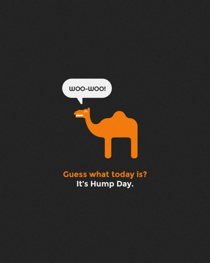 hump day camel | Funny #Geico #HumpDay Camel Poster & Fan Art | Poster Vine