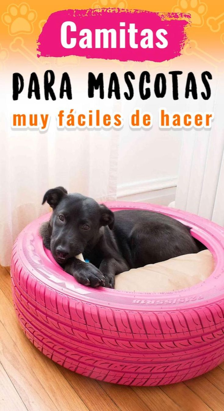 ¡Tus mascotas te lo agradecerán!  🐶🐱❤️ Happy Dogs, Dog Bed, Dog Stuff, Cats And Kittens, Diy Projects, Kitty, Bed Making, Pet Beds, Pet Accessories