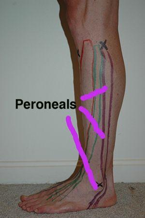 Athletes Training Athletes :: Peroneals
