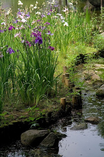 Japanese Zen Garden Water 381 best japanese gardens images on pinterest | japanese gardens