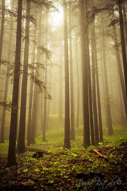 The Sacred Forest, Camaldoli(Tuscany).